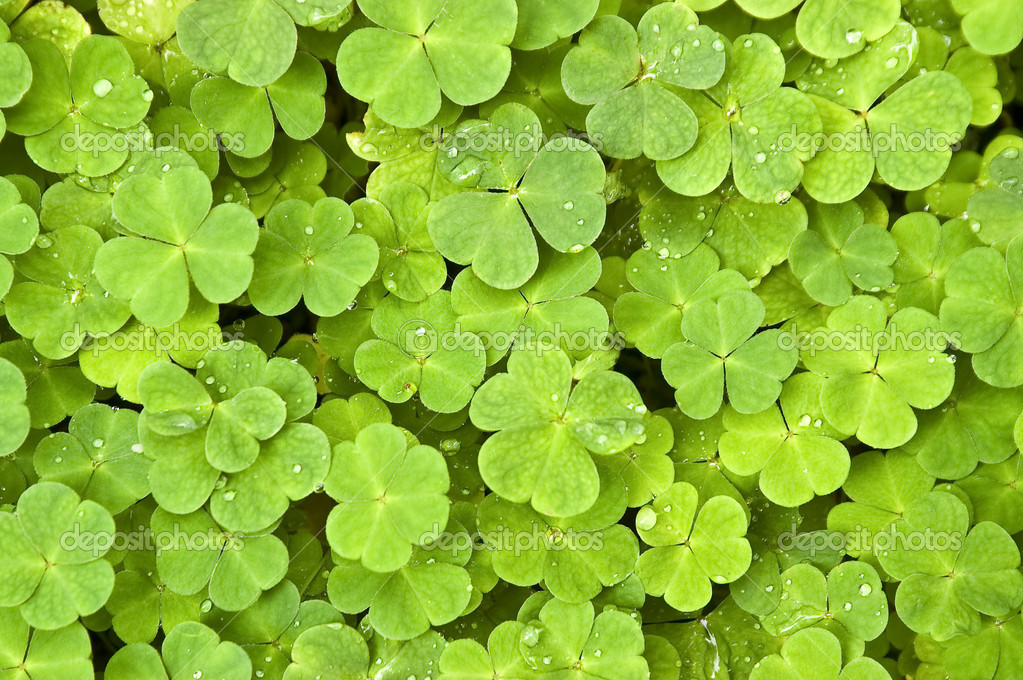 Green clover background with drops — Stock Photo #2390889