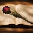 Dried Rose and Book — Stock Photo