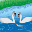 Swans on lake — Stock Vector