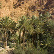 The Todra Gorge oasis — Stock Photo