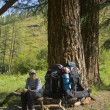 Stock Photo: Halt under larch tree