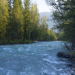 Wide mountain stream in forest, Altai - Foto Stock