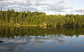 Forest lake in the evening of summer day — Stock Photo