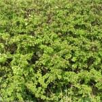 Green textures — Stock Photo #2272419