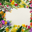 Stock Photo: Floral Design Elements