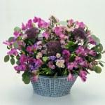 Floral Design Elements — Stock Photo #2305063