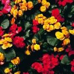 Floral Design Elements — Stock Photo #2305067