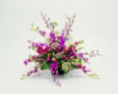 Floral Design Elements — Stock Photo