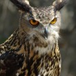Stock Photo: Eagle owl