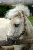 Pony — ストック写真