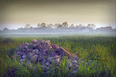 Stones in the fog — Stock Photo