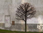 Tree city — Stock Photo