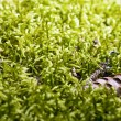 Green moss background - Stock Photo