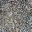 Old pine tree trunk texture — Stock Photo