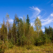 Autumn forest in warm sunny day — Stock Photo