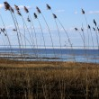 Reed on the coastline — Stock Photo