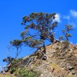 Stock Photo: Trees on rocky island, New Zealand