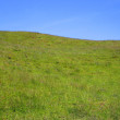 Stock Photo: Grassy Hill of Wildflowers, Waitomo, NZ