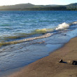 Sandy Shore of Lake Taupo, New Zealand - Stock Photo