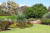 Formal Garden of Succulent Plants — Stock Photo