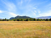 Field of Long Dry Grass & Mount Iron — Stock Photo