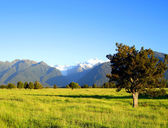 Field before Mt Cook & Mt Tasman — Stock Photo