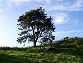Solitary tree on hill ridge — Stock Photo
