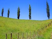 Five Trees on Hill Ridge, New Zealand — Stock Photo