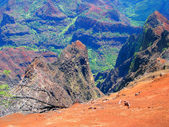 Waimea Canyon, Kauai, Hawaii — Stock Photo