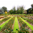 Formal Rose Garden — Stock Photo #2366887