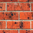 Stock Photo: Red Brick Wall with Black Glazing