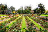 Formal Rose Garden — Stock Photo