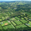 Stock Photo: Aerial view of Vineyards and Farms