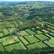 Aerial view of Vineyards and Farms - Stock Photo