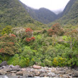 Stock Photo: Shore within Milford Sound, New Zealand