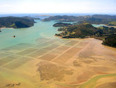 Mussel/Oyster Beds, New Zealand — Stock Photo