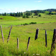 Fence and Farmland, Waitomo, NZ — Stock Photo