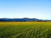 Grassy field of the Okiwi runway, NZ — Stock Photo