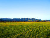 Grassy field of the Okiwi runway, NZ — Stock Photo