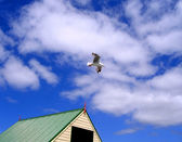 Seagull hovering above Shack — Stock Photo