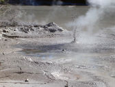Geothermal Activity near Rotorua, NZ — Stock Photo