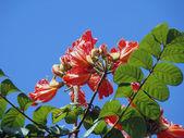 Flores tropicales contra el cielo azul — Foto de Stock