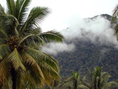 Coast Borneo landscape — Stock Photo