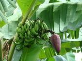 Frutas exóticas de borneo — Foto de Stock