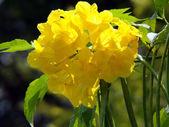 Tropical exotic flowers of Borneo — Stock Photo