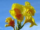 Flores exóticas tropicales de borneo. — Foto de Stock