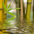 Stock Photo: Bamboo water reflection
