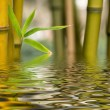 Bamboo water reflection - Stock Photo
