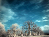 Infrared landscape — Stock Photo