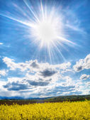Colza field under spring sun — Stock Photo